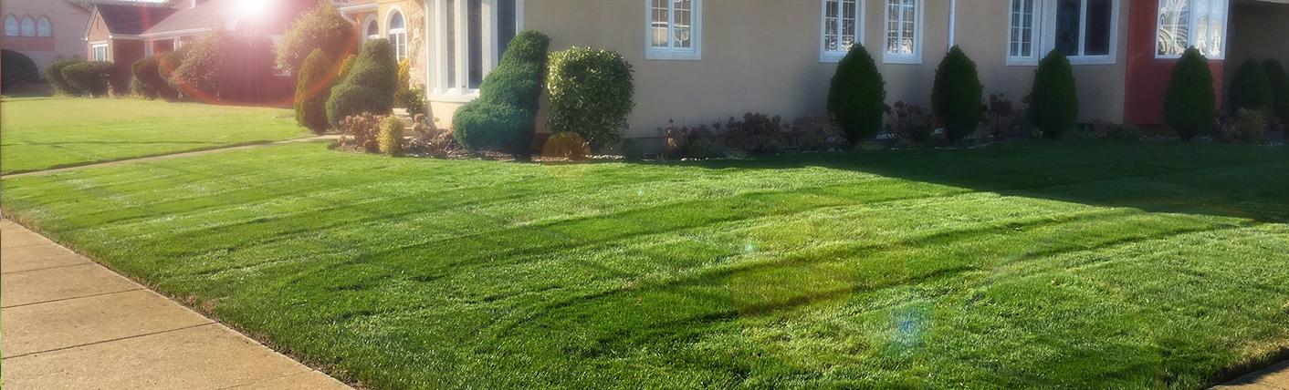 The Perfect Yard.